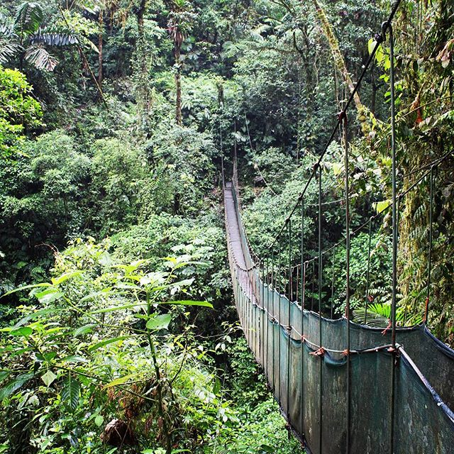 Arenal-Hanging-Bridges
